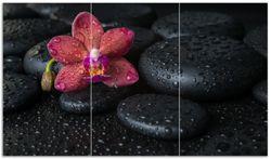 Herdabdeckplatte Orchideen-Blüte auf schwarzen Steinen, benetzt mit Wasser-Tropfen