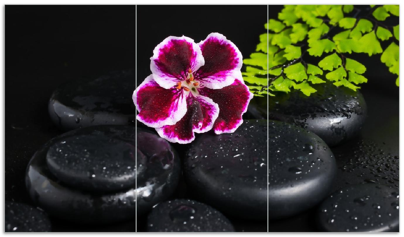 Herdabdeckplatte Purpur Geranienblüte auf schwarzen Basaltsteinen, benetzt mit Wasser-Tropfen – Bild 1