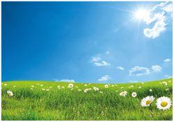 Wandbild Sommerwiese - Weiße Gänseblümchen vor blauem Himmel – Bild 1