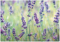 Wandbild Lila Blumenfreude - Violette Pflanzen auf der Wiese – Bild 1