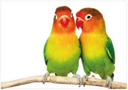 Wandbild Papageien auf dem dünnen Ast – Bild 1