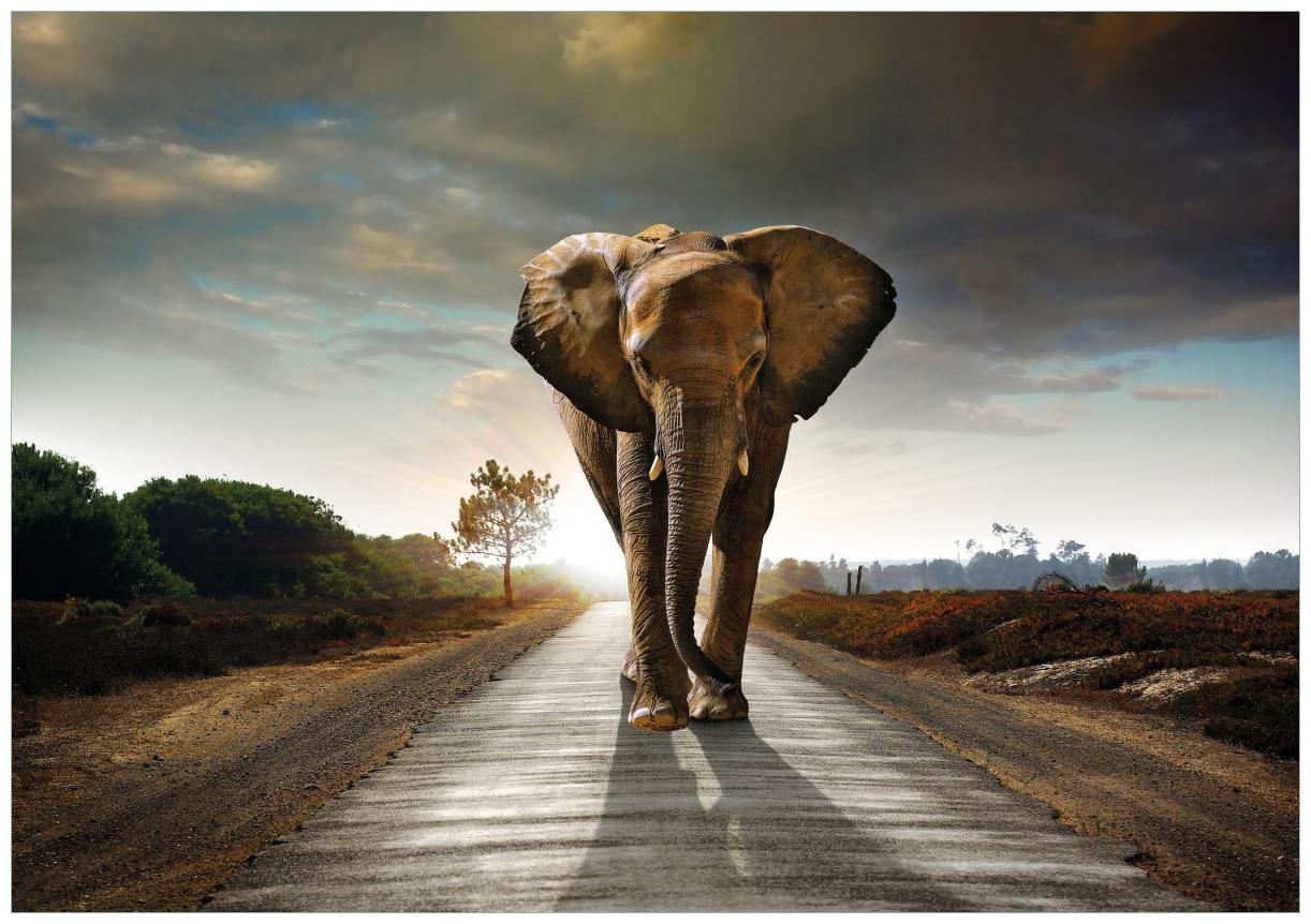 Wandbild Elefant bei Sonnenaufgang in Afrika – Bild 1