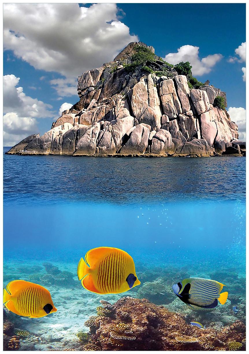 Wandbild Exotische Fische im Meer – Bild 1