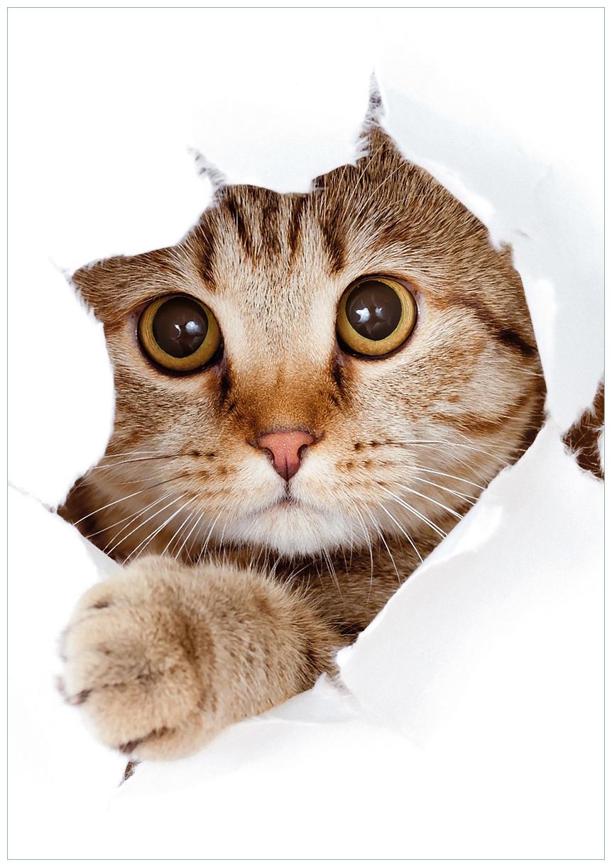 Wandbild Katze mit Blick nach vorn – Bild 1
