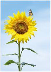 Wandbild Sonnenblume mit Schmetterling – Bild 1