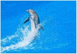 Wandbild Fröhlicher Delfin im blauen Wasser – Bild 1