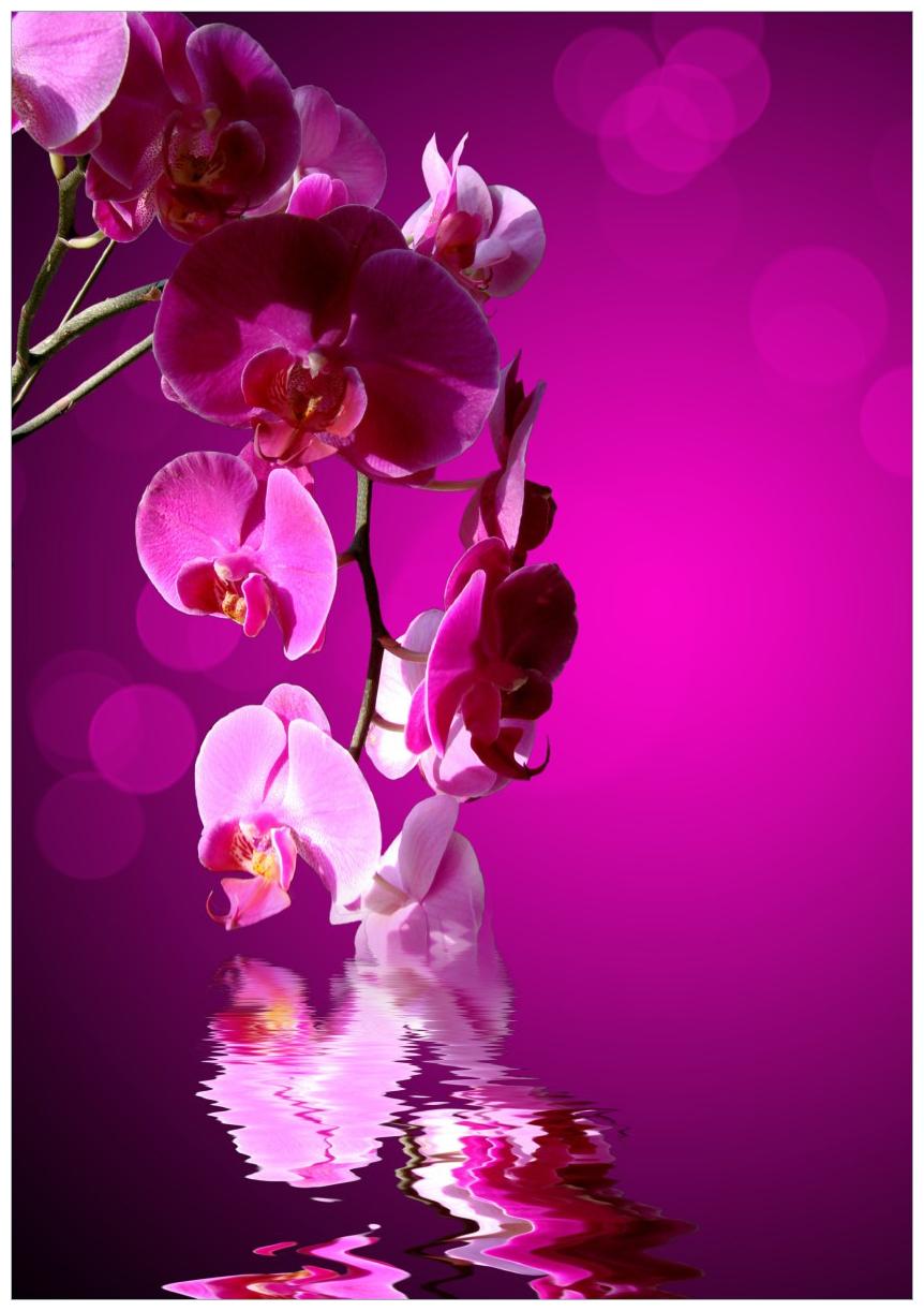 Wandbild Rosafarbene Orchidee  Blüten in pink – Bild 1