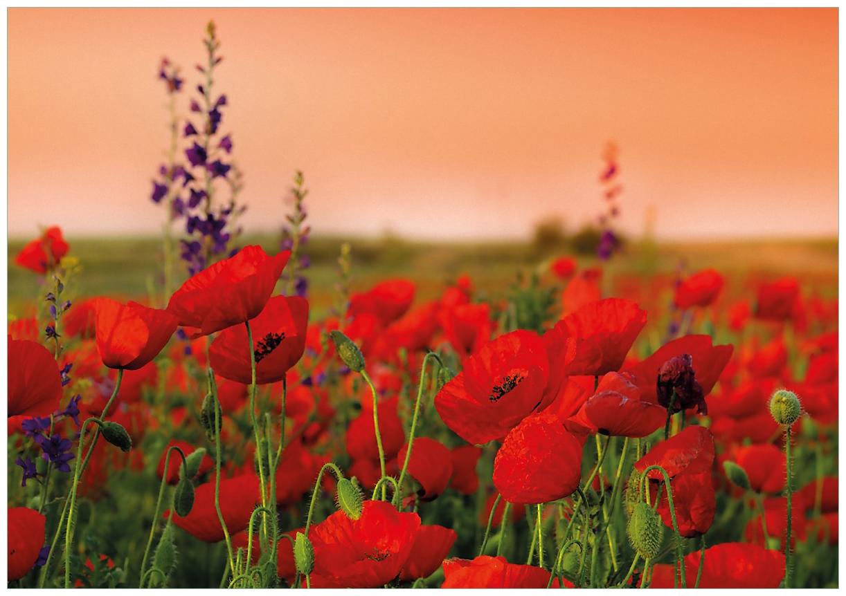Wandbild Mohnblumen auf dem Feld – Bild 1