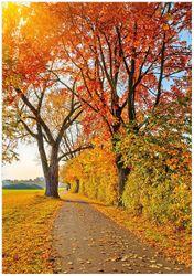 Wandbild Herbstlicher Waldweg mit buntem Laub – Bild 1