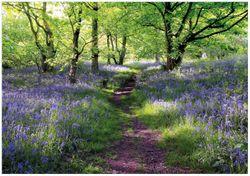 Wandbild Blaues Hasenglöckchen im Wald – Bild 1