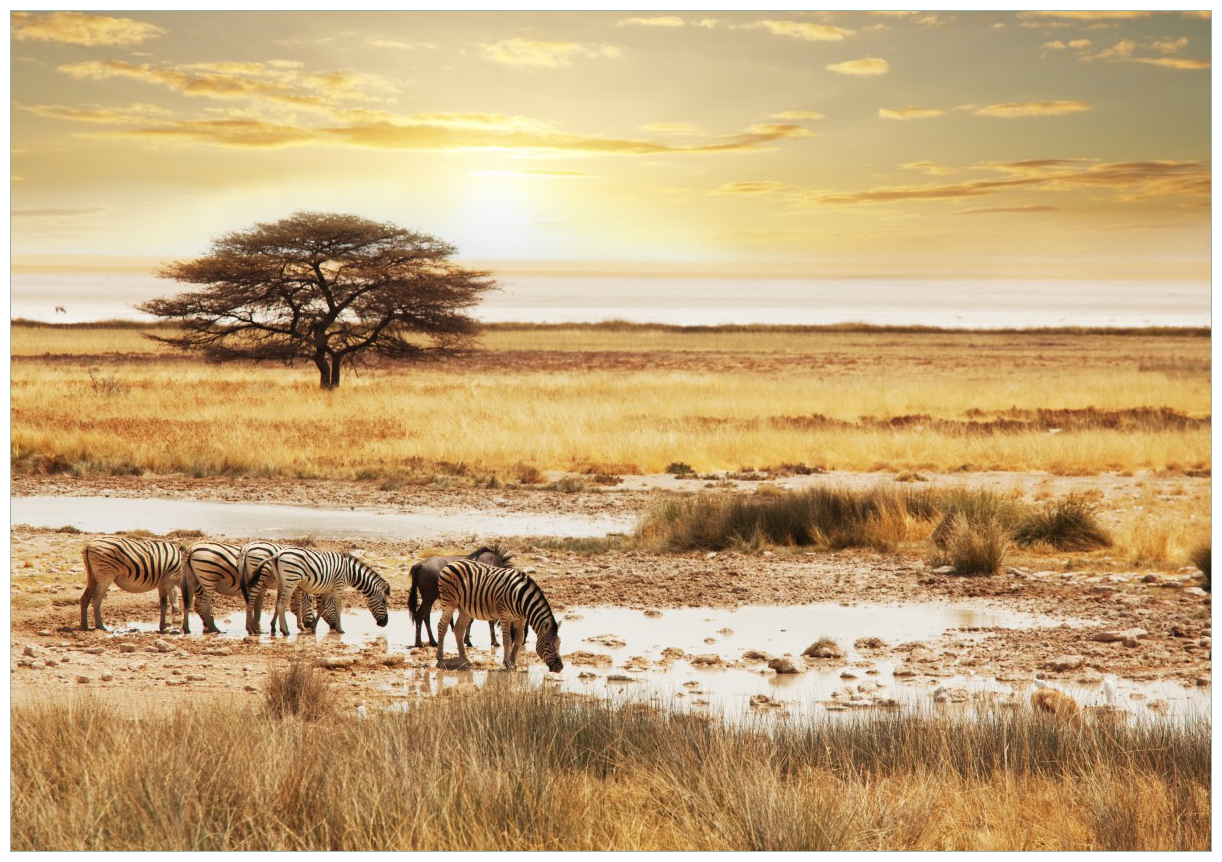 Wandbild Safari in Afrika  eine Herde Zebras am Wasser – Bild 1