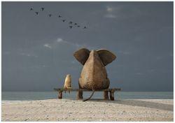 Wandbild Elefant und Hund sitzen auf einer Bank – Bild 1