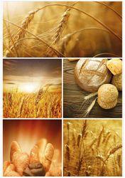 Wandbild Getreide und Brotsorten aus Weizen – Bild 1