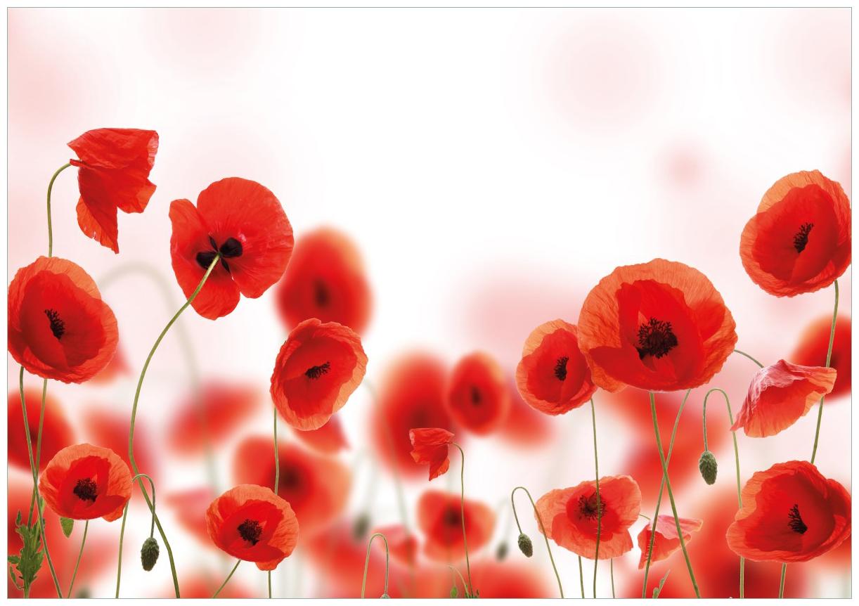 Wandbild Leuchtende Mohnblumen - Rote Mohnblumenblüten – Bild 1