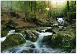 Wandbild Fließender Bach im Wald bei Sonnenuntergang – Bild 1