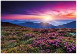 Wandbild Blumenbedeckte Wiese bei Sonnenuntergang – Bild 1