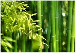 Wandbild Bambuswald mit grünen Bambuspflanzen – Bild 1