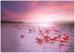 Wandbild Rosa Flamingos bei Sonnenuntergang – Bild 1