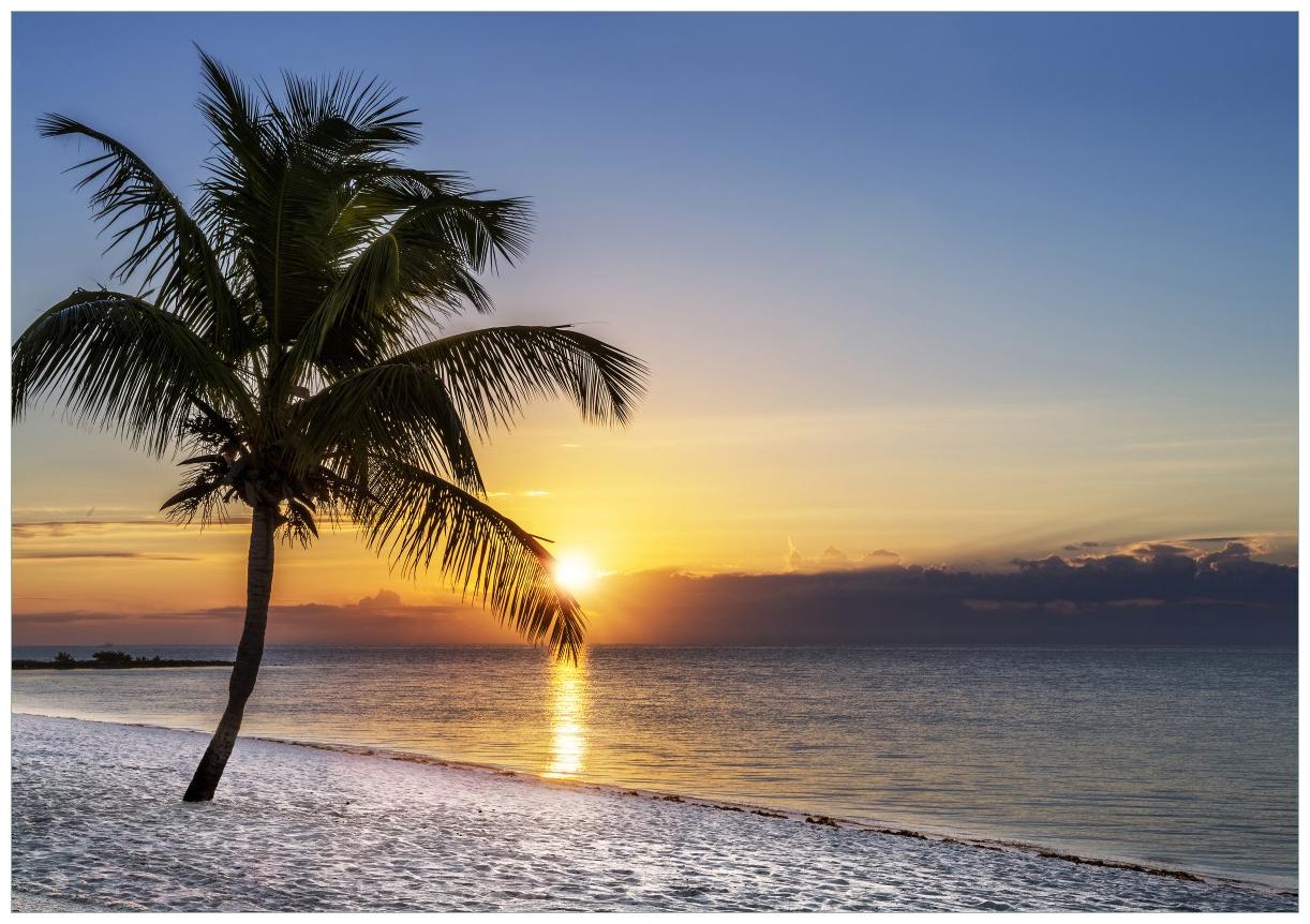 Wandbild Palme am Strand - Sonnenuntergang über dem Meer – Bild 1