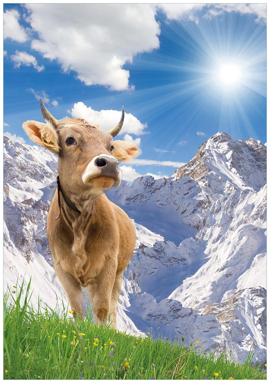 Wandbild Kuh im Sonnenschein in den Alpen – Bild 1