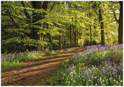 Wandbild Blaues Hasenglöckchen im Sommerwald – Bild 1