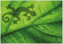 Wandbild Gecko Schatten auf grünem Blatt - Umriss – Bild 1