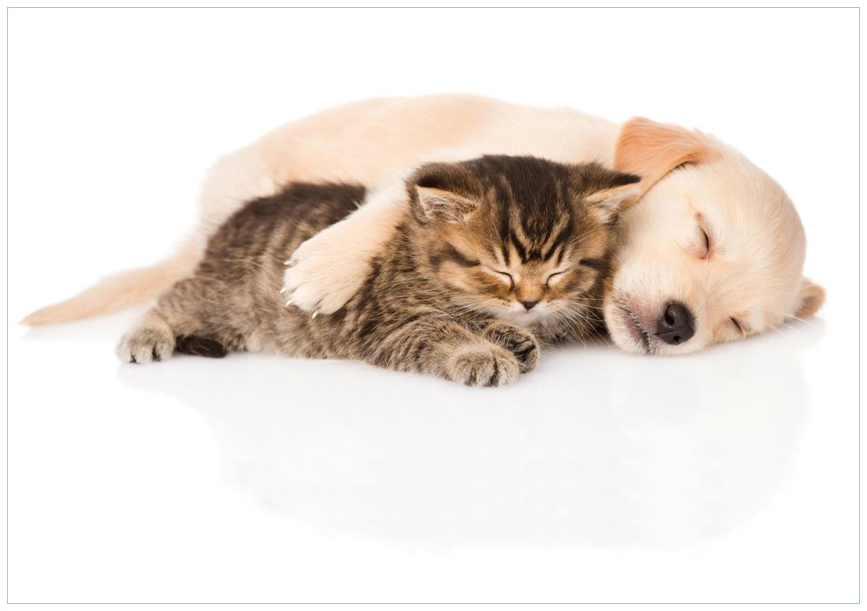 Wandbild Katze und Hund in Harmonie - Kuschelnde Tiere – Bild 1