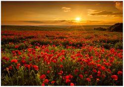 Wandbild Mohnblumenwiese bei Sonnenuntergang am Abend – Bild 1