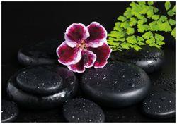 Wandbild Purpur Geranienblüte auf schwarzen Basaltsteinen, benetzt mit Wasser-Tropfen – Bild 1