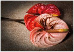 Wandbild Blüten einer Flamingoblume - Anthurie - auf schwarzem Marmor – Bild 1