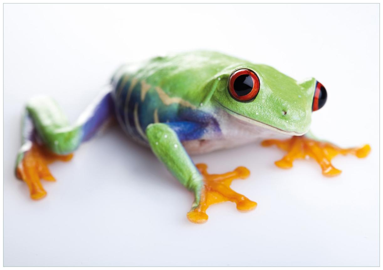 Wandbild Lustiger Frosch in grün und orange – Bild 1