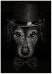 Wandbild Eleganter Hund mit Zylinder in schwarz-weiß – Bild 1