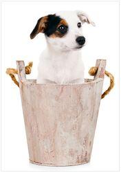 Wandbild Hunde-Welpe Jack Russel Terrier in einem Holzeimer – Bild 1