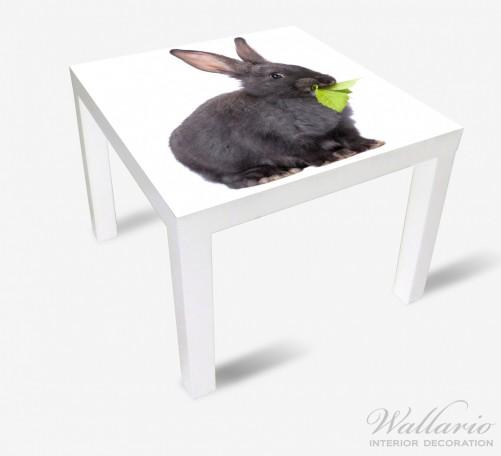 Möbelfolie Süßes Kaninchen mit Grünzeug beim Futtern – Bild 2