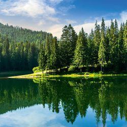 Glasbild Idyllischer See im Wald
