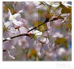 Herdabdeckplatte Kirschblüten in zartem Rosa - Frühling im Garten – Bild 1