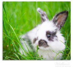 Herdabdeckplatte Süßer Hase im grünen Gras – Bild 1