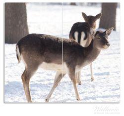 Herdabdeckplatte Zwei junge Elche im Schnee in Arizona - Amerika – Bild 1