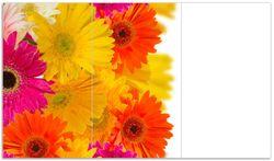 Herdabdeckplatte Bunte Gerberas vor weißem Hintergrund - pinke, gelbe, rote und weiße Blüten – Bild 1