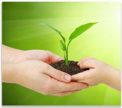 Herdabdeckplatte Eine zarte Pflanze - von Hand zu Hand – Bild 1