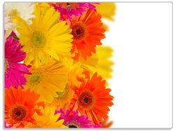 Glasunterlage Bunte Gerberas vor weißem Hintergrund - pinke, gelbe, rote und weiße Blüten – Bild 1
