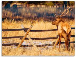 Glasunterlage Elch im Schnee - im Hochland von Colorado – Bild 1