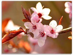Glasunterlage Frühlingsgefühle II - Kirschblüten in Nahaufnahme – Bild 1