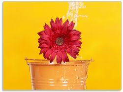 Glasunterlage Rote Blüte im Blumentopf - frisch begossen – Bild 1