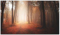 Herdabdeckplatte Herbstwald - Weg zu einer Lichtung im Wald – Bild 1
