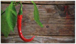 Herdabdeckplatte Hängende Chili-Schote – Bild 1