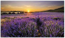 Herdabdeckplatte Sonnenuntergang über dem Lavendel – Bild 1