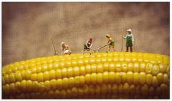 Herdabdeckplatte Lustige Bauernfiguren auf einem Maiskolben beim Arbeiten – Bild 1