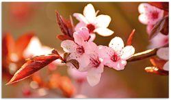 Herdabdeckplatte Frühlingsgefühle II - Kirschblüten in Nahaufnahme – Bild 1