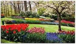 Herdabdeckplatte Bunte Blumen und Kirsch-Baum im Park blühen im Frühling – Bild 1